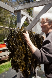 Bladderwrack, Hung up to Dry in Early May