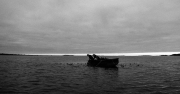 Gray Dawn Harvest for Kelp