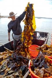 Kelp to Baskets