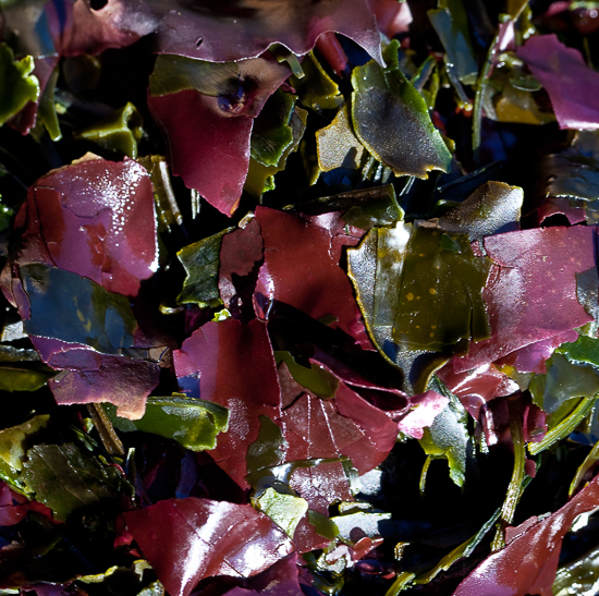 Soup Mix with dulse